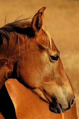The Orange Horse Poster by Robert Anschutz