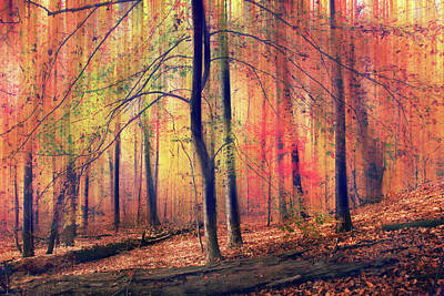 Poster featuring the photograph The Painted Woodland by Jessica Jenney