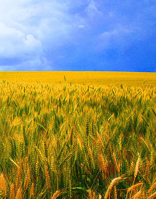 The Palouse Wheat Fields Poster