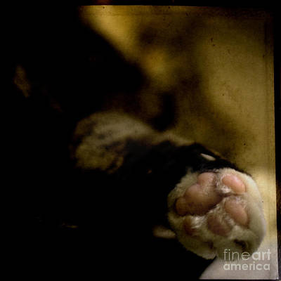 The Paw Poster