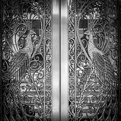 The Peacock Door Poster by Howard Salmon