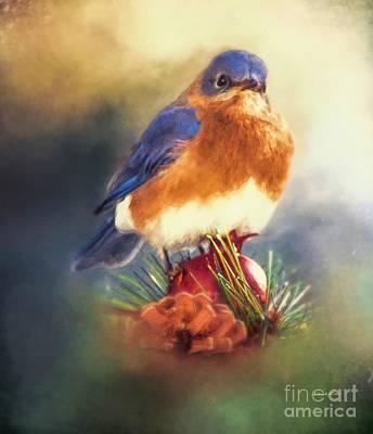 The Pondering Bluebird Poster