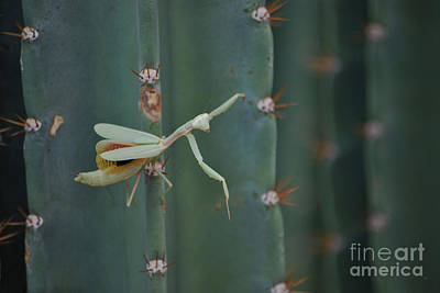 Poster featuring the photograph The Praying Mantis by Donna Greene