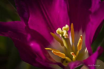 The Presentation Tulip Flower Art Poster by Reid Callaway