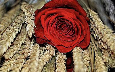 Poster featuring the photograph The Red Rose On A Bed Of Wheat by Diana Mary Sharpton