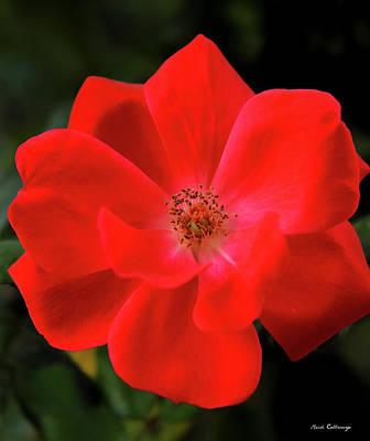 The Rose 9 Flower Garden Art Poster by Reid Callaway