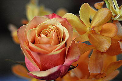 Poster featuring the photograph The Rose And The Orchid by Diana Mary Sharpton