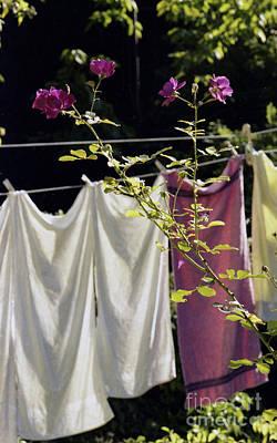 The Rose Towel Poster by Erik Falkensteen