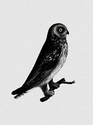 The Short Eared Owl Poster by Mark Rogan