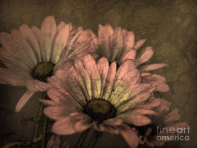 The Soft Glow Of Spring Poster