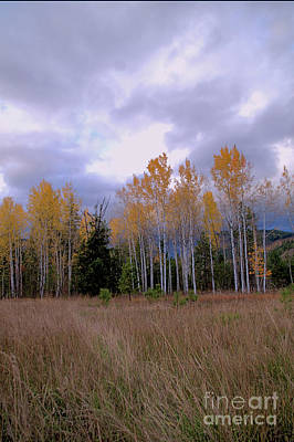 The  Song Of The Aspens 2 Poster by Victor K