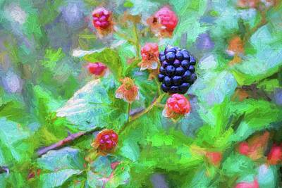 The South Georgia Blackberry Poster by JC Findley