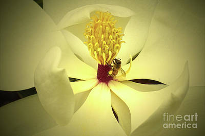 The Southern Magnolia Poster by Kim Pate