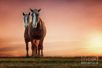 The Stallion And The Mare Poster by Tamyra Ayles