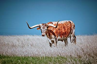 Poster featuring the photograph The Texas Longhorn by Linda Unger