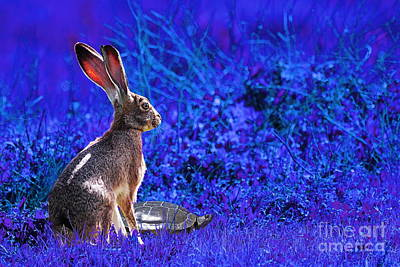 The Tortoise And The Hare . Blue Poster by Wingsdomain Art and Photography