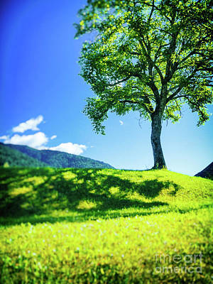 Poster featuring the photograph The Tree On The Hill by Silvia Ganora