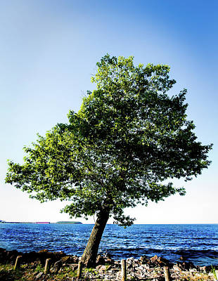 Poster featuring the photograph The Tree by Onyonet  Photo Studios