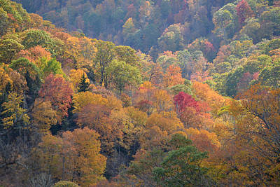 The Trees Of Autumn On The Blue Ridge Poster