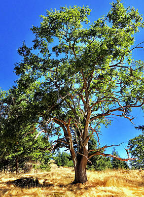 Poster featuring the photograph The Turtleback Tree by Lorraine Devon Wilke