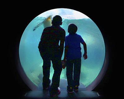 The Visit - Penguins - Aquarium Poster
