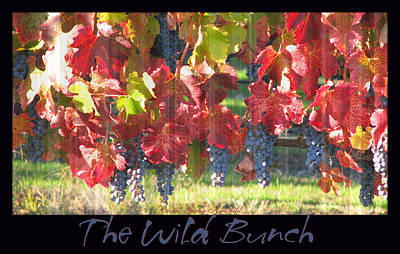 The Wild Bunch - Nature Prints - Grapevines Poster