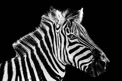 The Zebra Stripes Poster