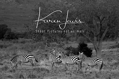 Poster featuring the photograph The Zebra Tree by Karen Lewis