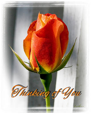 Thinking Of You, Rose Poster