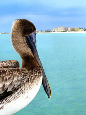 This Is My Town - Pelican At Clearwater Beach Florida  Poster by Angela Rath