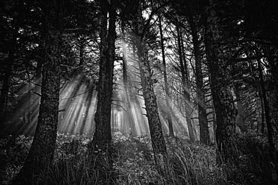 This Is Our World - No.1 - Forest Floor Morning Mist Bw Poster by Paul W Sharpe Aka Wizard of Wonders