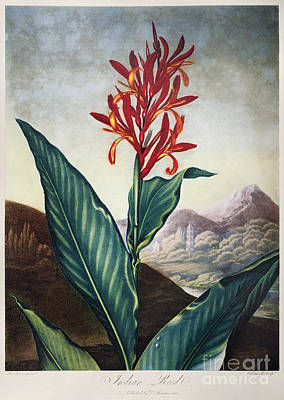 Thornton: Indian Reed Poster by Granger