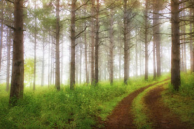 Through The Forest Poster by Jennifer Rondinelli Reilly - Fine Art Photography