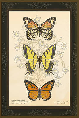 Three Butterflies Poster
