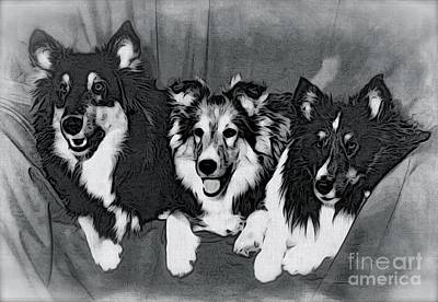 Three Collies Poster by Phyllis Kaltenbach
