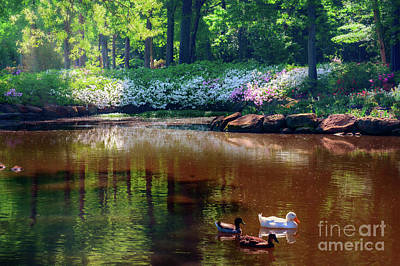Three Ducks At The Azalea Pond Poster