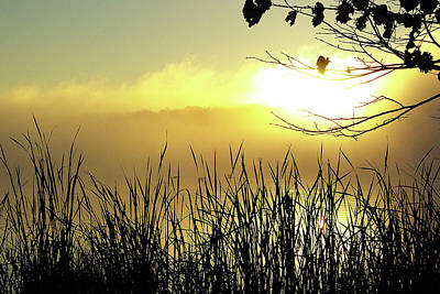 Three Geese At Sunrise Poster