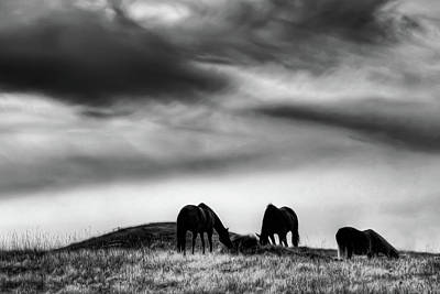 Three Horses On The Hill Poster by David Patterson