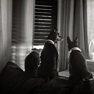 Three Min Pin Dogs Poster