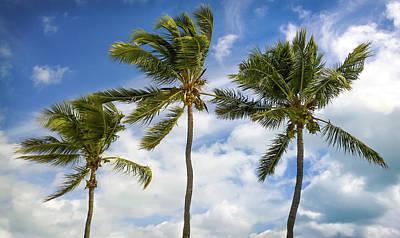 Three Palms Poster by Karen Wiles