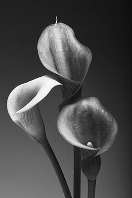 Three Pink Calla Lilies Poster by George Oze