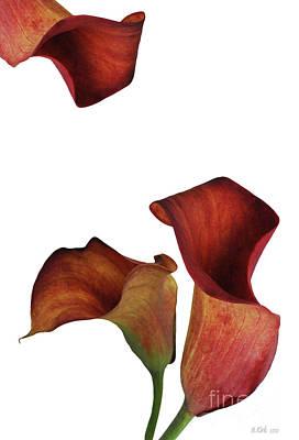 Three Rust Calla Lilies Poster