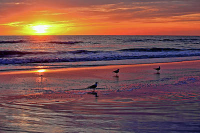 Three Seagulls On A Sunset Beach Poster