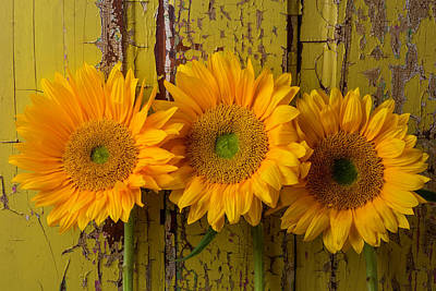 Three Sunflowers Against Old Wall Poster