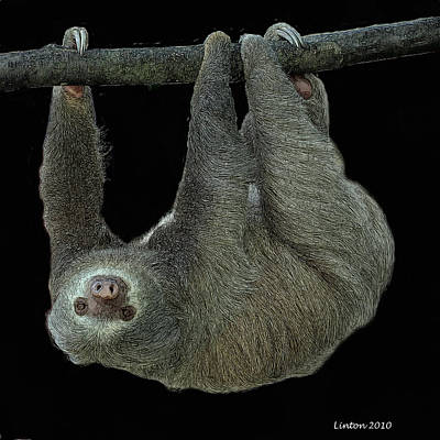 Three-toed Sloth Poster by Larry Linton