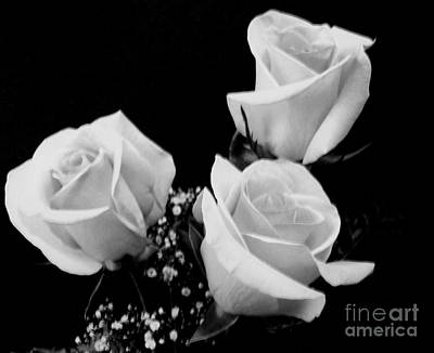 Three White Beauty Roses Poster by Marsha Heiken