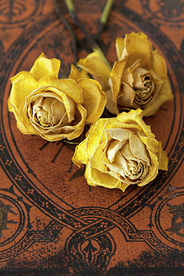 Three Yellow Roses Poster