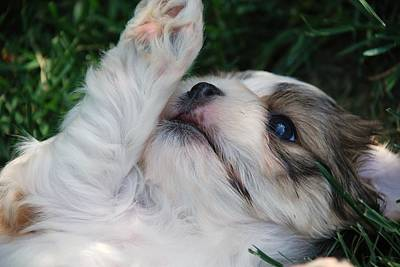 Through A Puppy's Eyes Poster