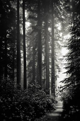 Through The Redwoods - Black And White Poster by Eduard Moldoveanu