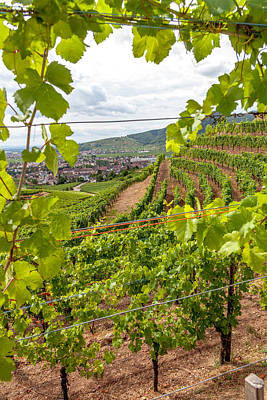 Through The Vineyards Of Turckheim Poster